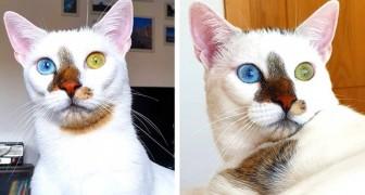 Bowie, das wunderbare Kätzchen mit den uterschiedlichen Augen, das zum Internetstar geworden ist