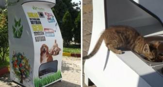 Questi geniali dispenser forniscono acqua e cibo per gli animali randagi in cambio di bottiglie di plastica