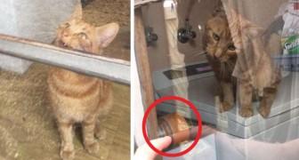 Rimane chiusa fuori di casa mentre svolge le faccende domestiche, ma il suo gatto riesce ad aprirle la porta