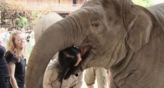 Here's how an elephant  shows his deep affection