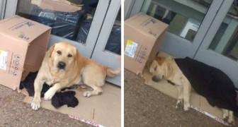 El perro no sabe que el patrón falleció y lo espera por días frente al hospital en donde estaba internado