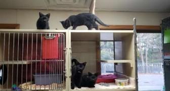 Kattungar på flykt - 4 små syskon lyckades öppna sin bur utan att volontärerna på djurskyddshemmet märkte något