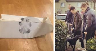 Le propriétaire n'admet pas les animaux domestiques à la maison, alors ces 4 jeunes demandent au voisin de jouer avec son chien