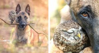 Deze fotograaf is erin geslaagd om de mooiste momenten vast te leggen van de onwaarschijnlijke vriendschap tussen een hond en een uil