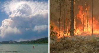 Les incendies en Australie sont devenus si considérables qu'ils ont commencé à générer un climat distinct