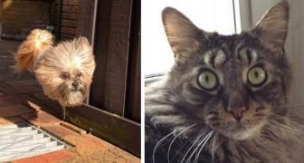 17 foto buffe di animali che hanno mostrato di avere una grande personalità