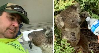 Lors des incendies tragiques en Australie, un homme a sauvé un petit koala qui cherchait désespérément un refuge