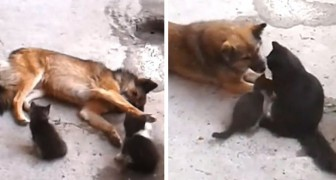 Here is the moving moment in which a cat introduces her kittens to her dear canine friend