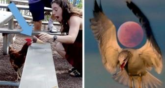 24 einzigartige Fotos zur richtigen Zeit mit einer guten Portion Glück aufgenommen