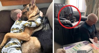 These 14 photos give us an idea of ​​how great is the love that forms the bond between humans and their pets