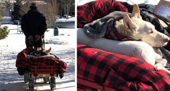 Every day this man takes his paralyzed dog for a ride in its special dog carriage