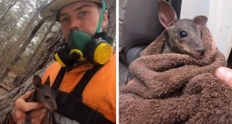 A fireman rescued a kangaroo joey that was trying to save itself from a raging bushfire by taking shelter under a tree trunk