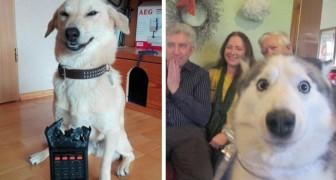 15 foto's van honden die hun eigenaren tot wanhoop hebben gebracht