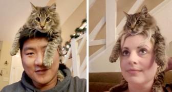 Deze kat zit graag op het hoofd van zijn baasjes, alsof het een comfortabele muts is