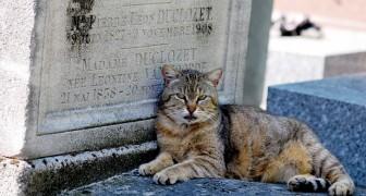 New York : enfin, les animaux de compagnie peuvent être enterrés dans les cimetières à côté de leurs maîtres