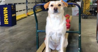 Ein Dieb stiehlt seinen Wagen auf einem Parkplatz: Darin war sein geliebter Hund, den er nie wieder sehen wird