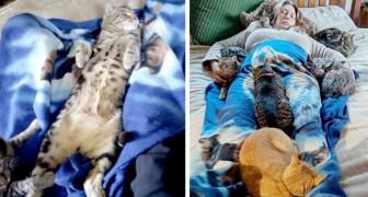 Estes gatinhos sobem na cama e confortam a sua dona que estava se recuperando de uma cirurgia