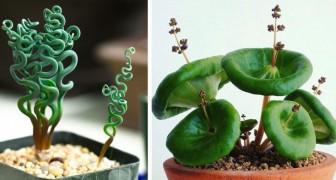 13 ungewöhnliche Wohnungspflanzen, die dem Haus eine lebendige Note verleihen können