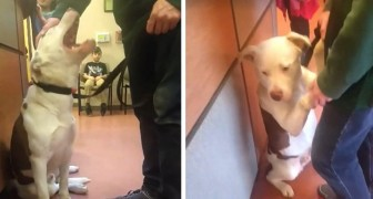This dog clings desperately to his owner when he realizes that he is being left at the animal shelter
