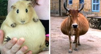 13 adorabili foto di animali in dolce attesa, immortalati poco prima del parto