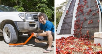 Wanderung der roten Krabben auf Christmas Island: Die Autos sind mit speziellen Schuhen ausgestattet, um sie nicht zu zerquetschen