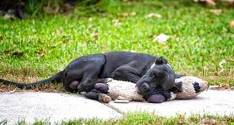 Questo cucciolo randagio dorme abbracciato a un vecchio peluche: la sua foto ha commosso tutti
