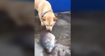 This dog trying to save some fish will make you realise how  animals are better than humans