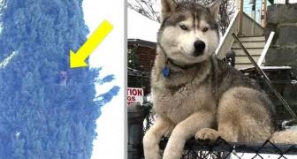 11 urkomische Bilder von Hunden, die wie Katzen aufgewachsen zu sein scheinen