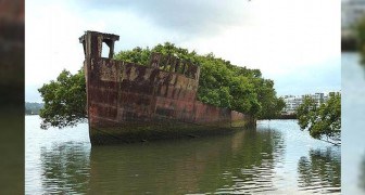 De mysterieuze charme van SS Ayrfield, het oude wrak dat is veranderd in een drijvend bos