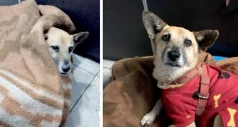 Efter att ha blivit övergiven på flyplatsen väntade den här hunden på sin ägare i 6 månader framför samma dörr
