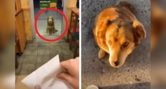 Esta cachorrinha se apresenta todos os dias fora de um restaurante para ganhar a sua comida preferida