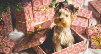 Muchas personas ya están re-vendiendo online los cachorros recibidos de regalo para Navidad