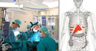 Questo nuovo dispositivo può riparare un fegato e tenerlo in vita per 7 giorni fuori dal corpo umano