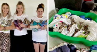 These rescued baby wallabies are now safe in their warm blankets