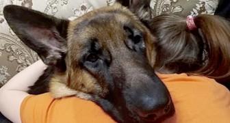 L'amour qui existe entre un chien et son maître n'a pas besoin de mots