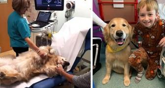 Deze honden helpen de jonge patiënten van een kinderziekenhuis elke dag om hun angsten te overwinnen