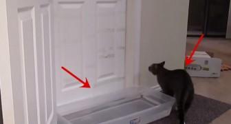 Pourquoi ont-il mis une bassine d'eau devant la porte? Et surtout, ça va marcher?