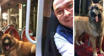 A bus driver picks up a very nice lost dog and helps him find his family