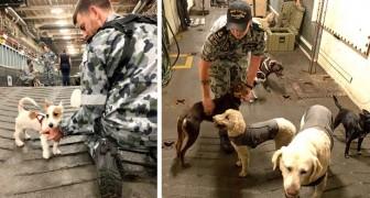 La Marina australiana ha alojado en un barco a más de 100 animales domésticos