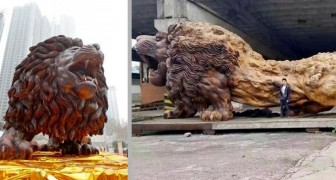 Een jongen en zijn 20 assistenten hebben een gigantische leeuw uit een enkele mammoetboom gesneden