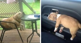 17 hilarische foto's van honden die in slaap zijn gevallen in de meest absurde situaties en posities