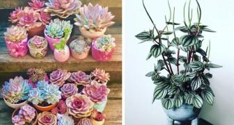 19 plantes d'intérieur que vous ne risquez pas de faire mourir, même si vous n'avez pas la main verte