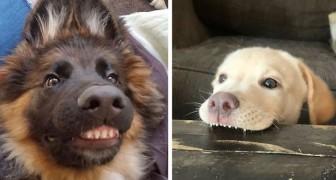 24 grappige foto's van honden die met hun glimlach hun eigenaars hebben doen lachen