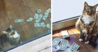 Den här katten samlar in pengar för hemlösa genom att stjäla dem från förbipasserande som stannar för att leka med honom