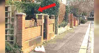 A woman got out of her car to help a dog whose toy had fallen over a house fence wall