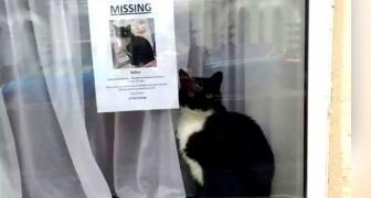 Un chat perdu est retrouvé juste à côté de l'affiche annonçant sa disparition