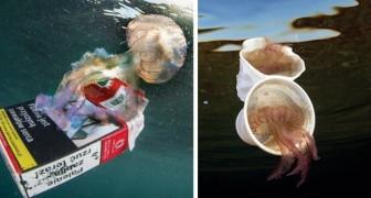 Un sub italiano fotografa le meduse insieme alla spazzatura: le foto mostrano la sporcizia dei nostri mari