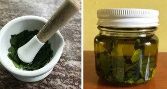 Homemade bay leaf oil is a concentrate of vitamins and goodness that can be used to flavor any dish