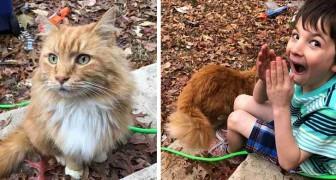 Deze kat verschijnt in het huis van een kind waarvan er net een was gestorven: ze zijn meteen gek op elkaar