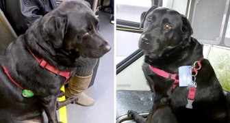 Eclipse is a famous dog that takes the bus every day alone to go for a walk in her favorite park
